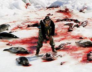 Abattage massif de bébés phoques au Canada